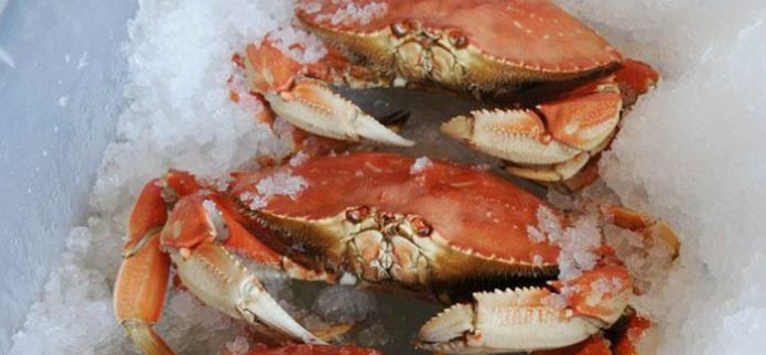 How to Catch Your Own Dungeness Crab Meal  Off the Oregon Coast