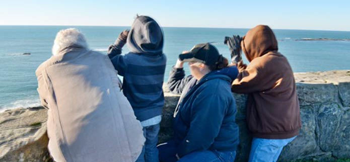 Spring Whale Watching Season is Coming!