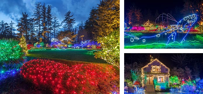 Oregon Gardens Christmas.33rd Annual Holiday Lights At Shore Acres Oregon S