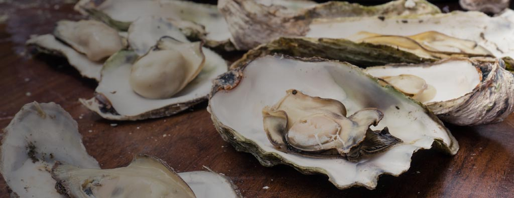 Where Can I Find the Best Oysters on Oregon's Adventure Coast?